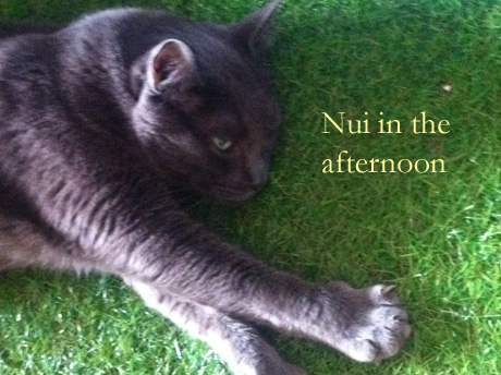 Nui in the afternoon